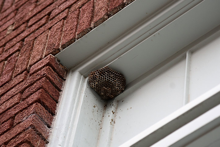 We provide a wasp nest removal service for domestic and commercial properties in Harringay.